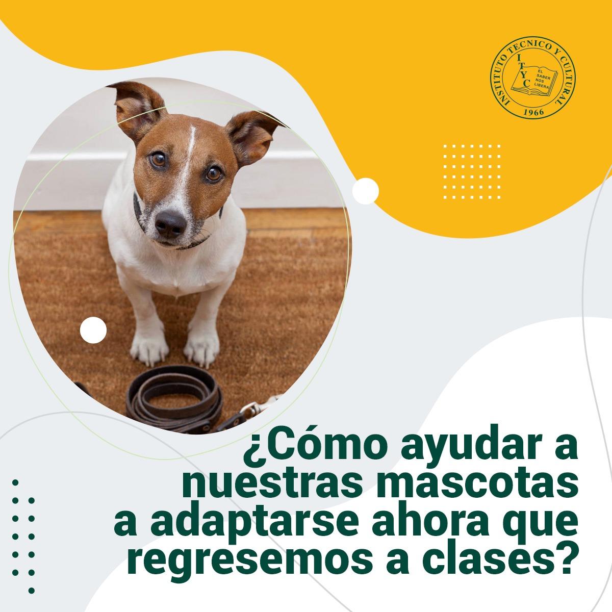 ¿Cómo ayudar a nuestras mascotas a adaptarse ahora que regresemos a clases?